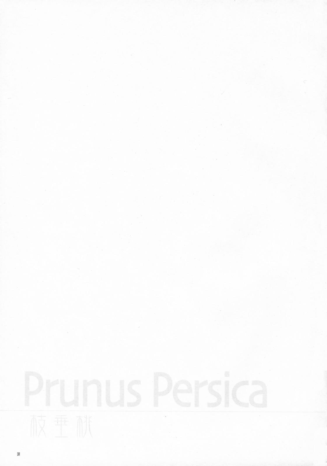Prunus Persica 29